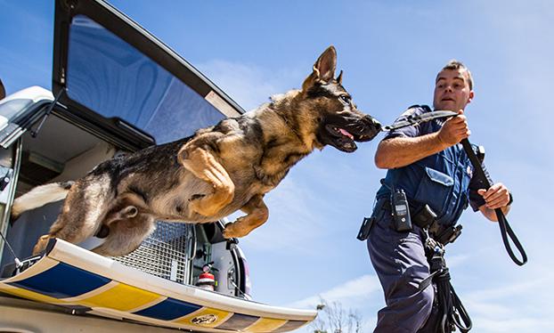 New Cops - Dog Handler